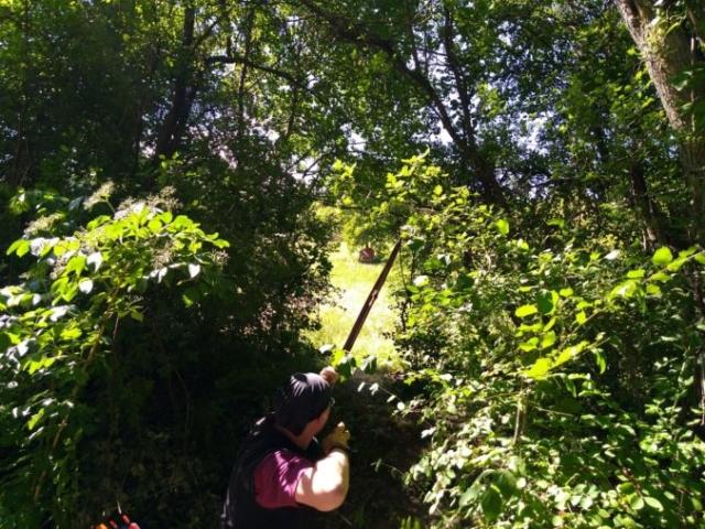 Bogenschütze schießt auf Bison